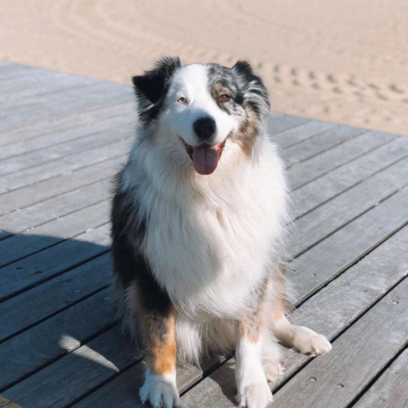 April Dog Elwood
