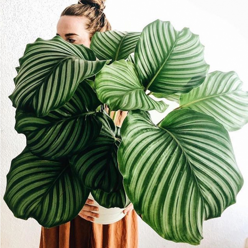 Into-The-Wild-Plants.jpg