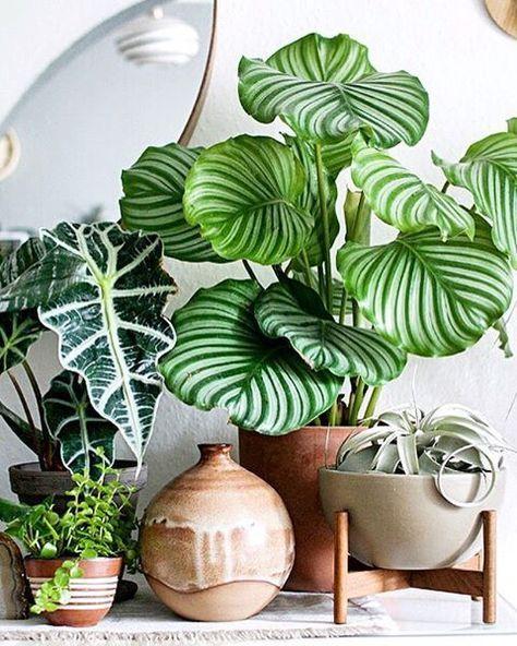 patterned-plants.jpg